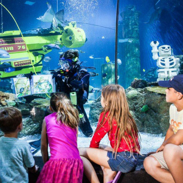4 kids looking at diver in the aquarium of fishes