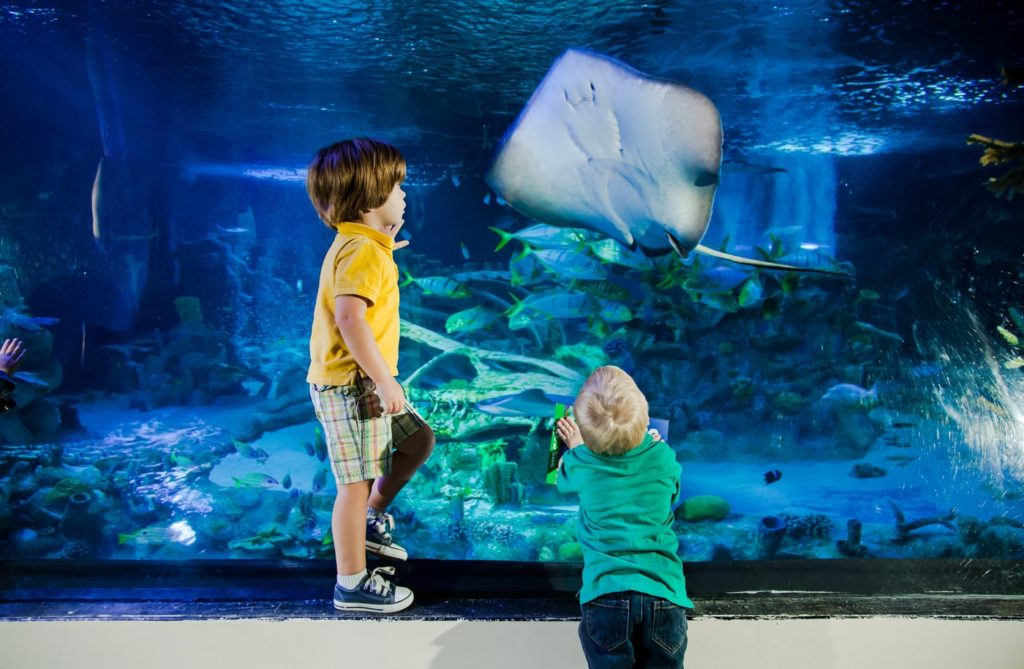 2 kids standing on front of tank with sting ray
