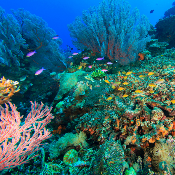 Coral reef in many colours
