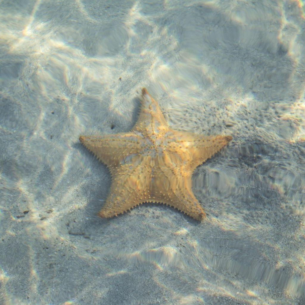 beige starfish underwater
