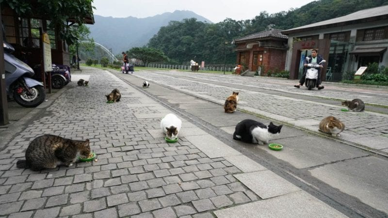 cats lying on stone cobbled streets