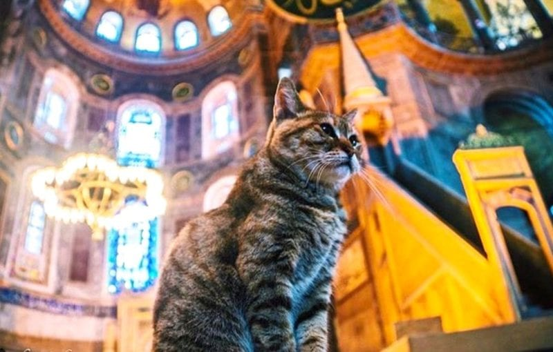 grey cat in a mosque