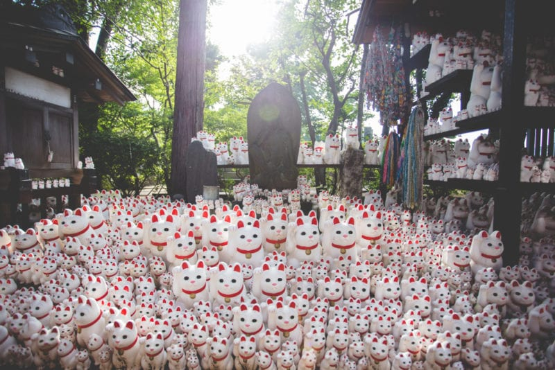 many white and red cats