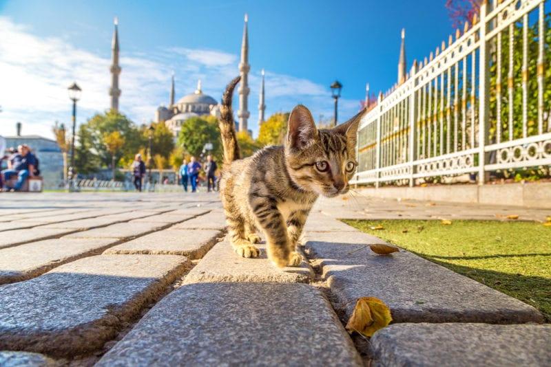cat walking on a stone pavement