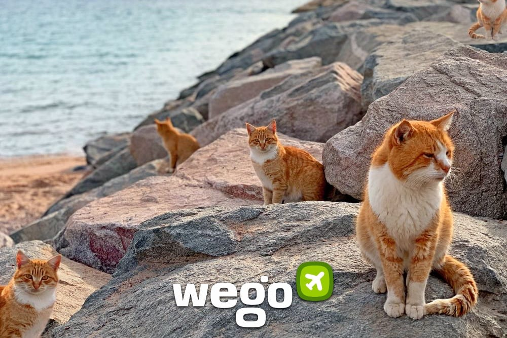 10 Must-visit Places for Cat Lovers to Profess Undying Love for the Fabulous Felines