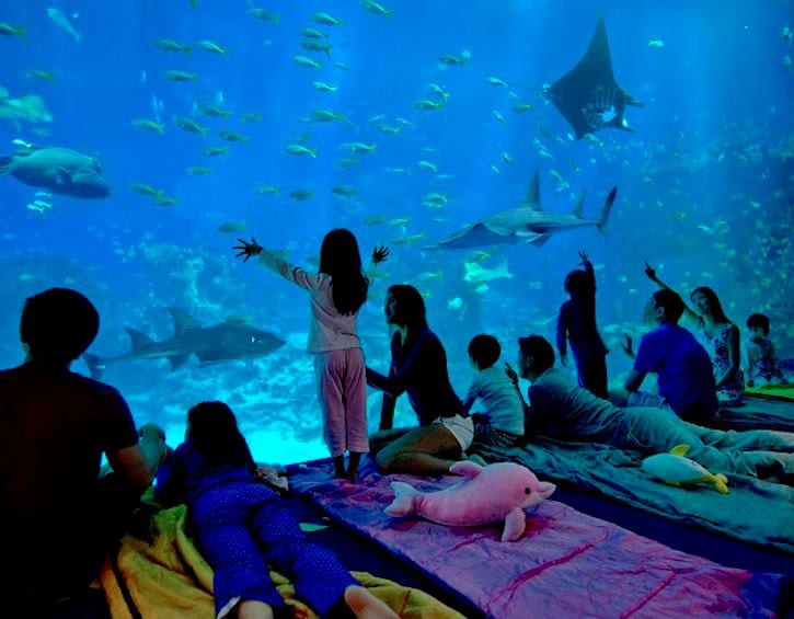Kids in camp in front of aquarium