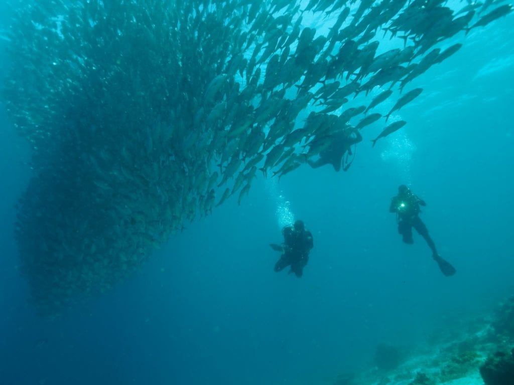 2 divers underwater with a huge school of fish in front