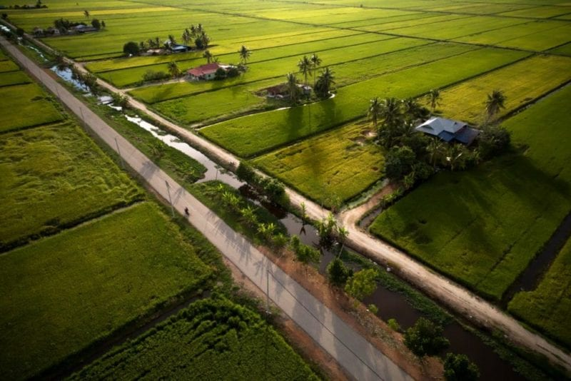 paddy fields at Sekinchan