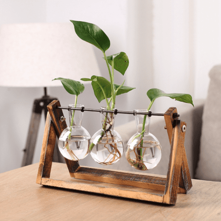 hydroponic plant in glass flasks with unique wooden stand