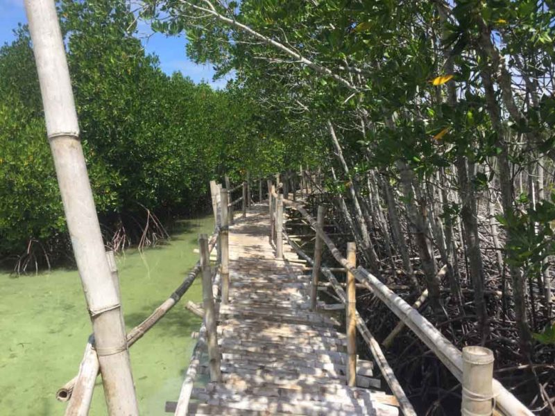 Wooden pathway along Mangrove Eco Park