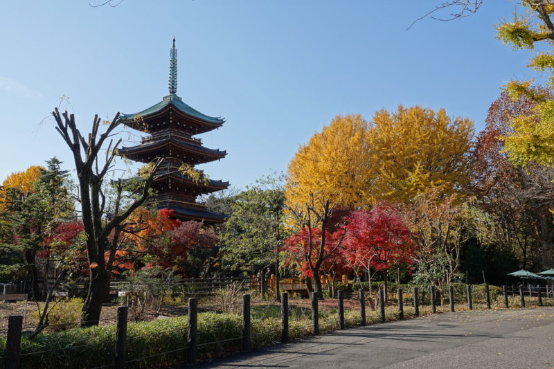 Trees in autumn with pagoda shrine in background