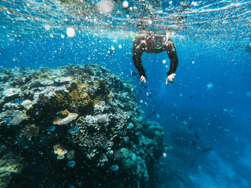 1 diver snorkeling next to coral reefs in bue waters