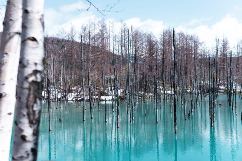 Blue Pond in Hokkaido Japan