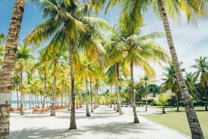 Rows of palm trees on white sandy beach in Panglao
