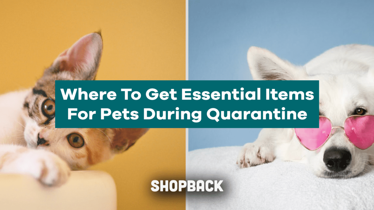 Where To Get Pet Essentials During ECQ: Pet Stores and Vet Clinics
