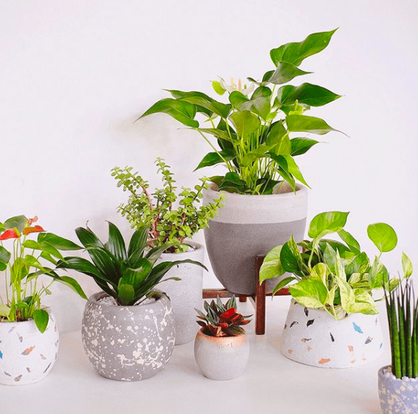 indoor plants where to buy