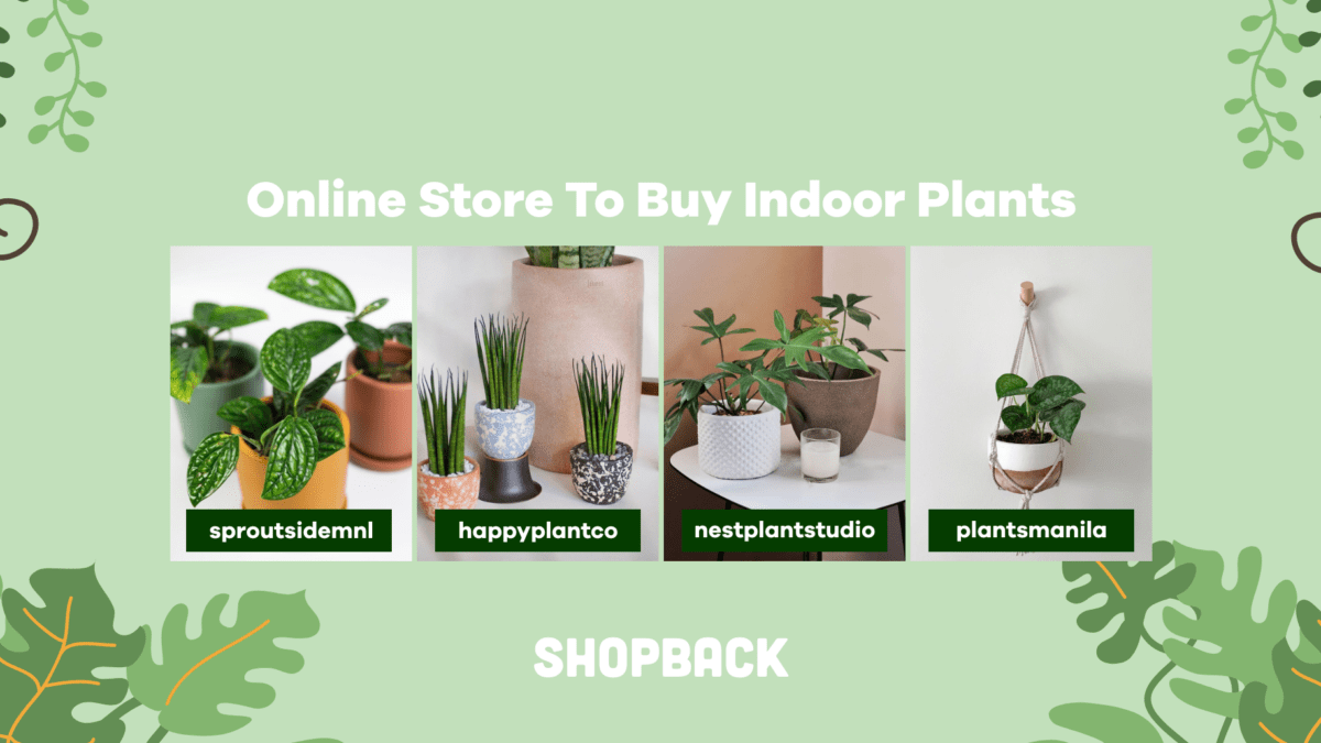 Local Instagram Stores To Buy Cute & Affordable Indoor Plants