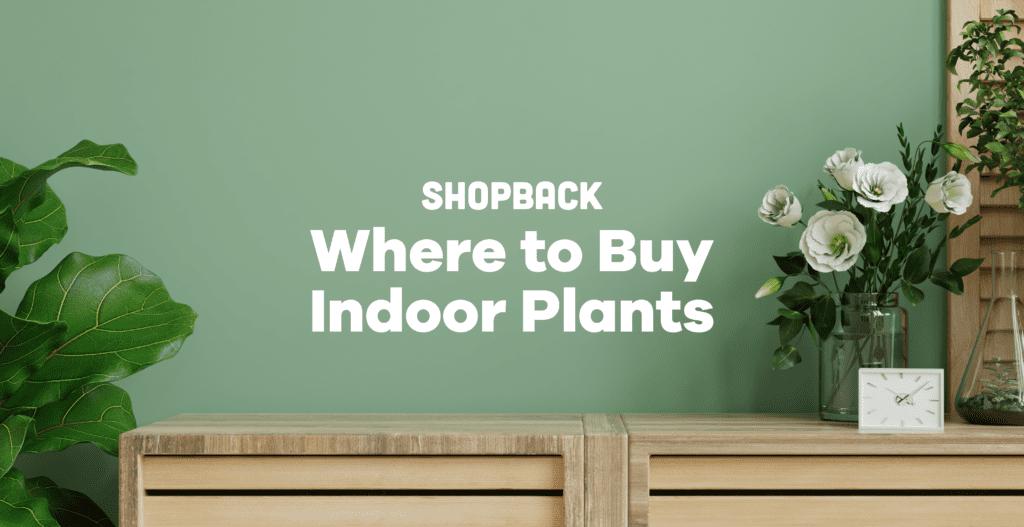 where to buy indoor plants manila