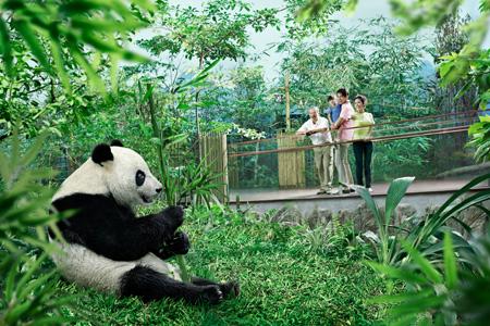 img-giant-panda-forest