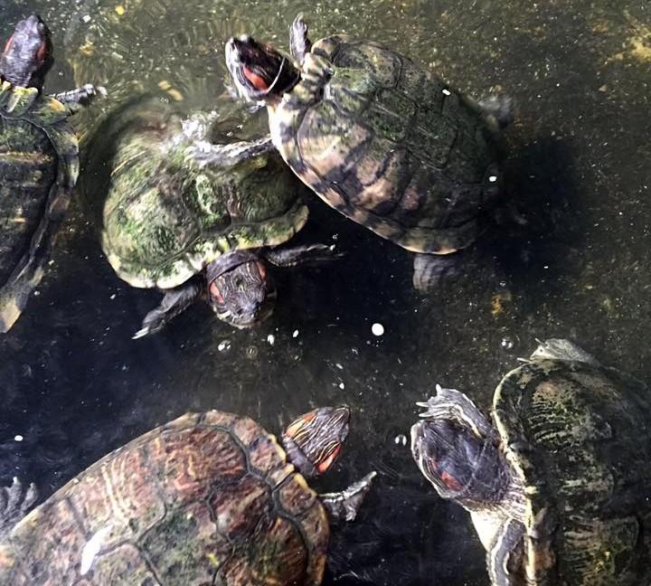 turtle fish farm