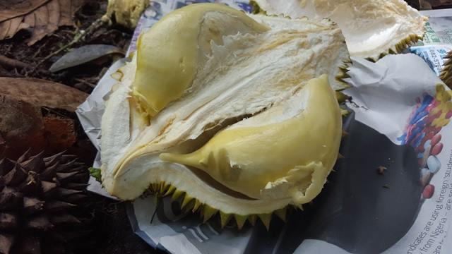 Plump durian flesh