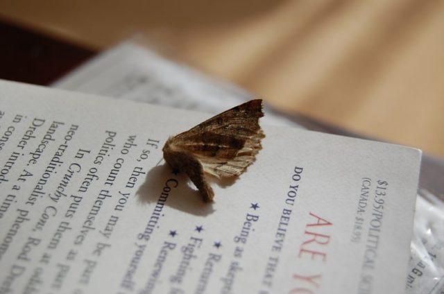 Kill moth superstition