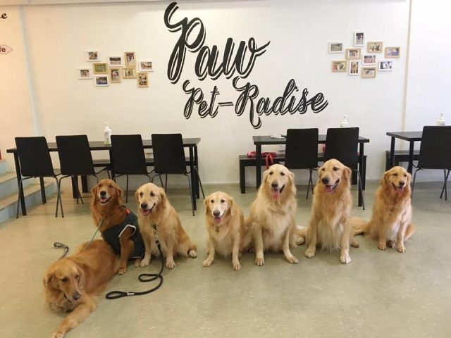 Canine party