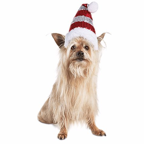 Christmas Hats For Dogs.Dress Up Your Pet Dog In Christmas Costumes From Petco This