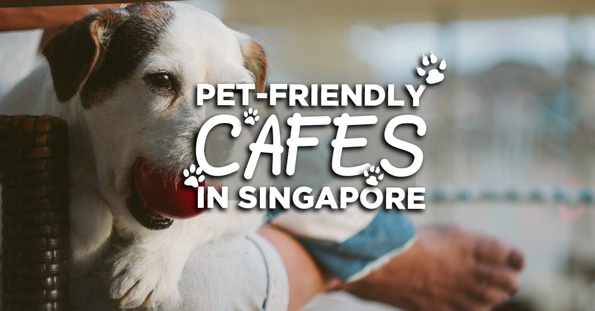 8 Pet Friendly Cafes To Celebrate Your Furry Friends' Birthdays At!