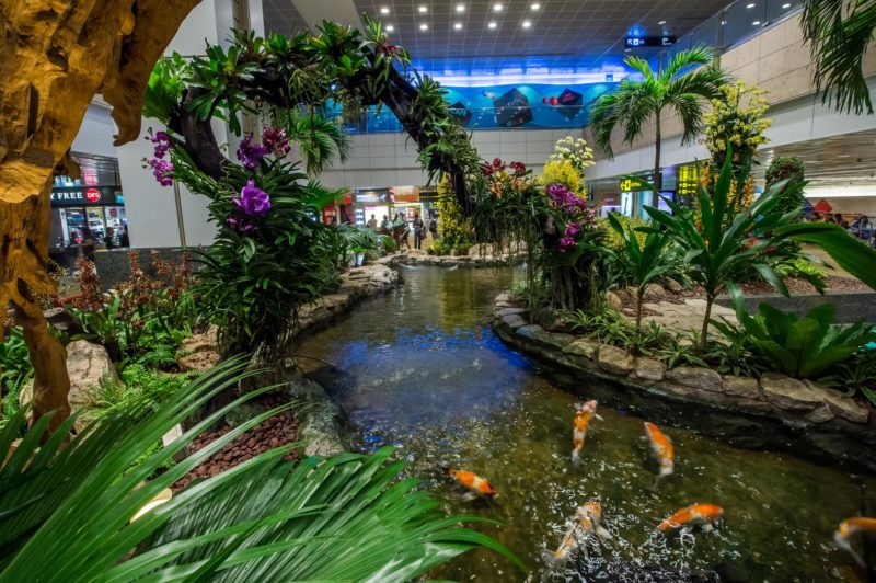 Orchid Garden and Koi Pond at Changi Airport