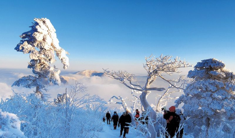 Taebaeksan in winter with frozen trees as people hiked the trails