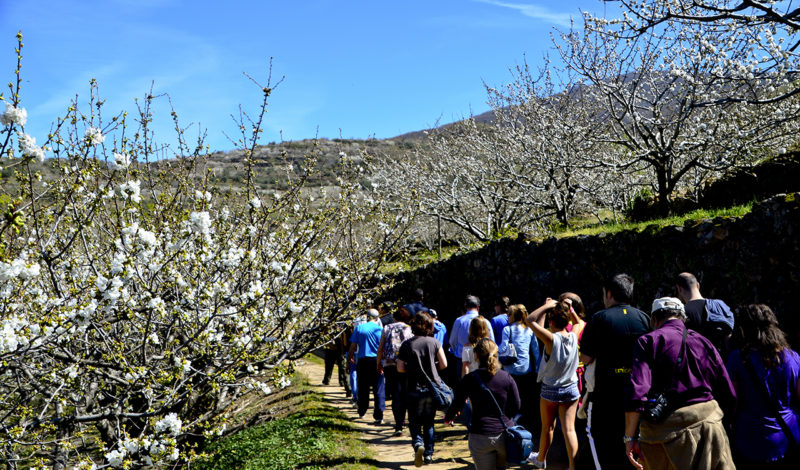 Cherry Blossoms and hiking trail in Jerte Valley