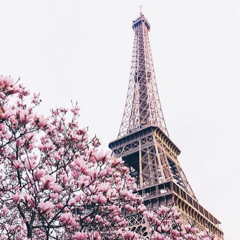 Cherry blossoms with Eiffel Tower in the background
