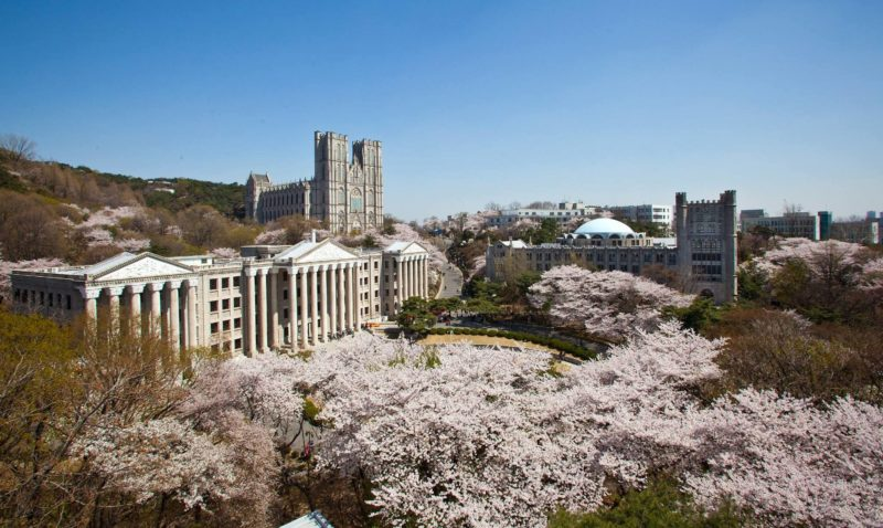 Cherry blossoms with the gothic Kyung Hee University building in the background