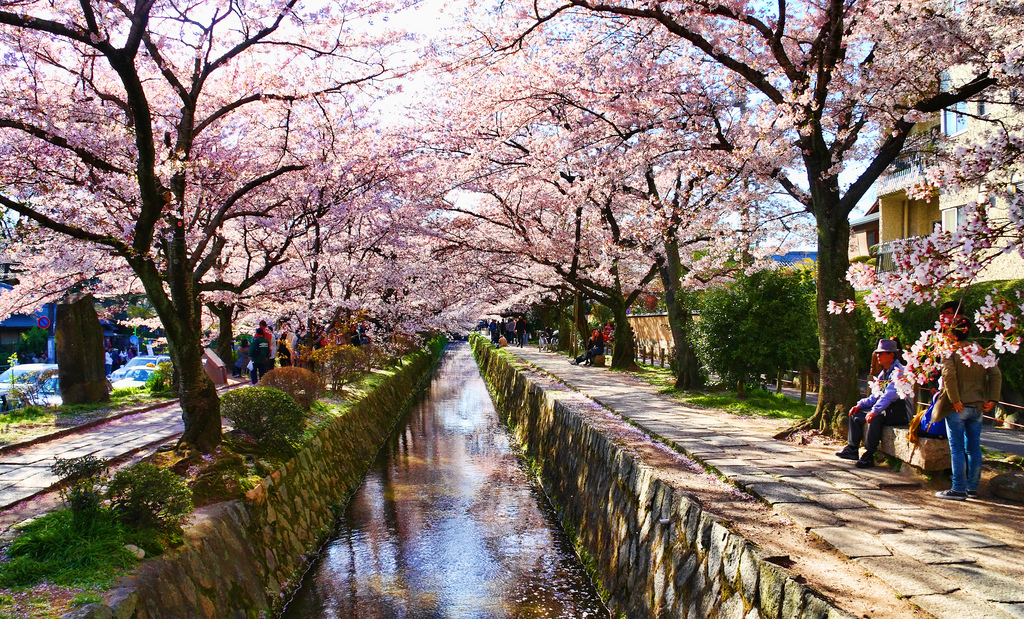 19 Best Spots for Cherry Blossom Viewing Around the Globe – 2018