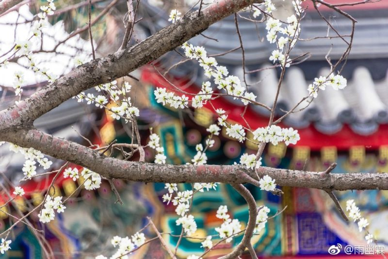 Summer Palace with spring flowers
