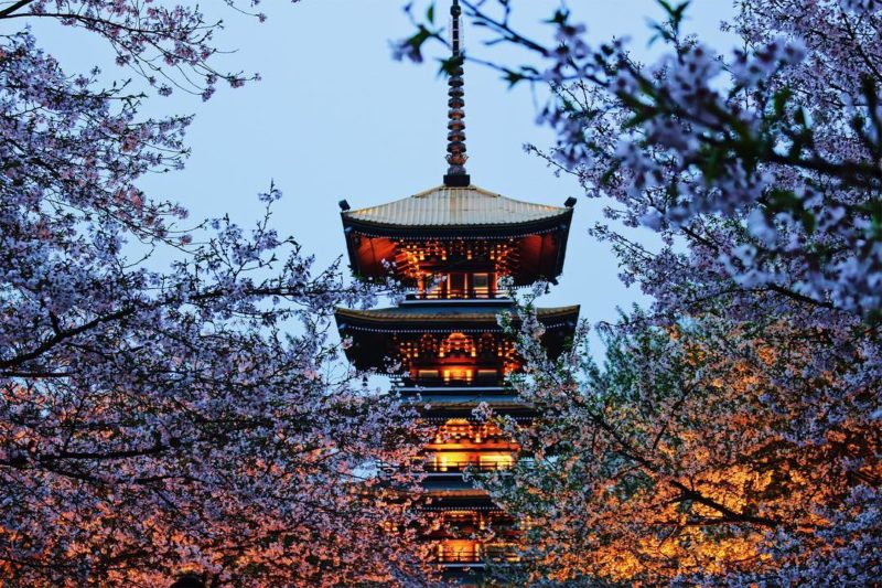 Cherry blossoms with the 5-level pagoda in East Lake Cherry Blossom Park in the evening