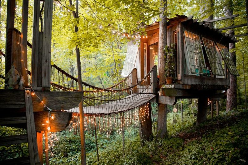 A treehouse stay amidst a forest