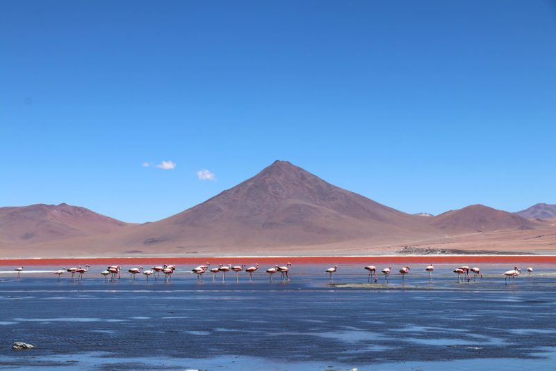 Unique view of flamingos in the salt lake Salar de Uyuni, Bolivia