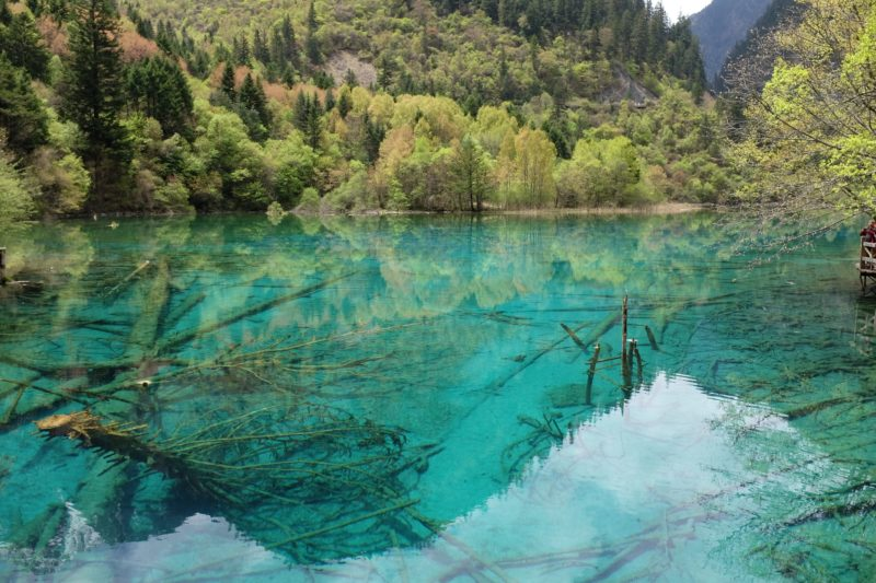 Lake Wuhua Hai in Jiuzhaigou China