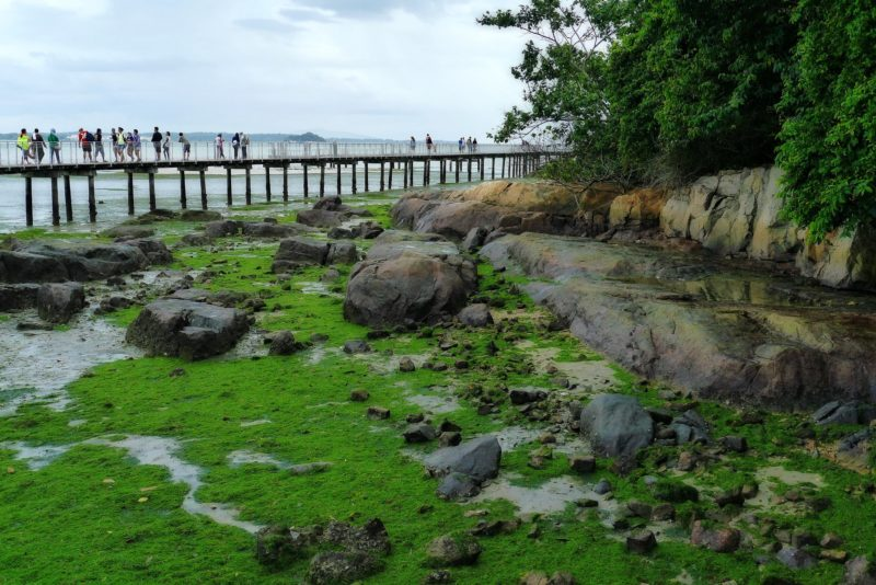 It is free to visit the Chek Jawa Nature Park in Pulau Ubin