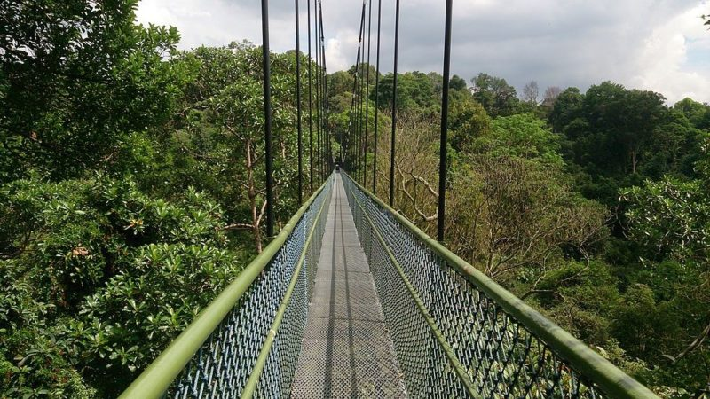 MacRitchie Park Treetop Walk is a free activity in Singapore