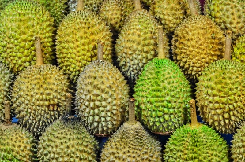 Checking durian's shape to see its quality