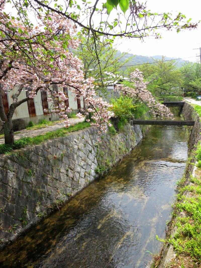 philosopher's path japan