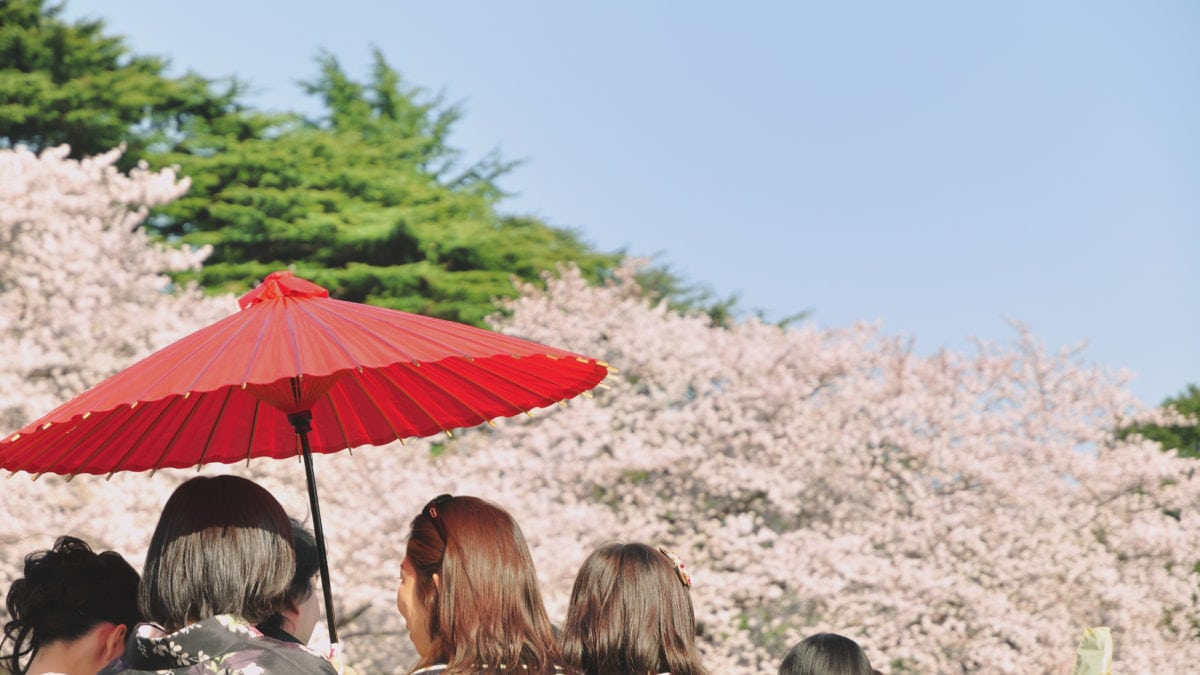 Best Places to Hanami During Japan's Cherry Blossom Season