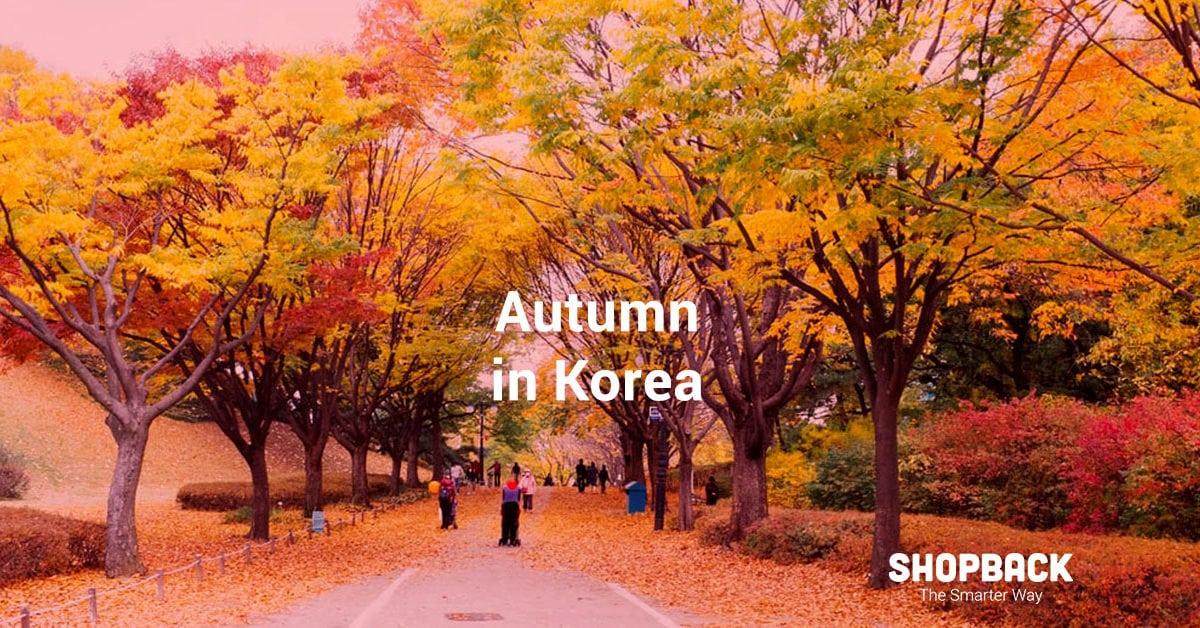 Autumn in Korea: Where to Go to See The Maple Leaves Falling