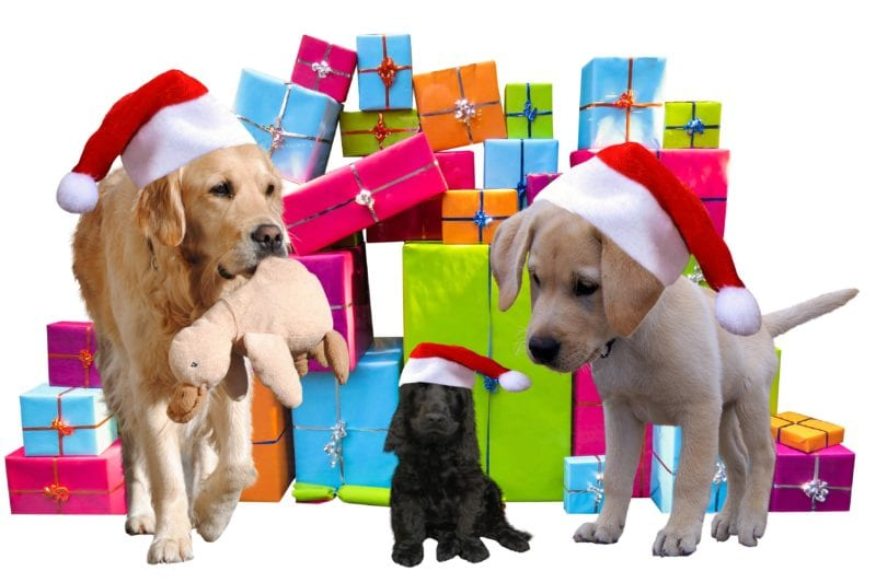 2 dogs and 1 black pup with xmas gifts as backdrop