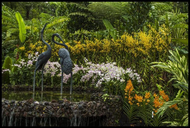 Singapore Botanic Gardens lake with plants and birds