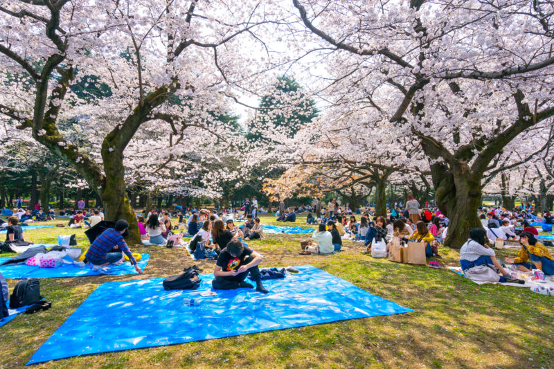 groups of people having picnic at public park in Tokyo, Japan