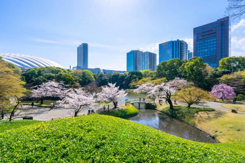 cherry blossom garden with urban Tokyo city